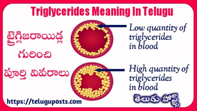 Triglycerides Meaning in Telugu